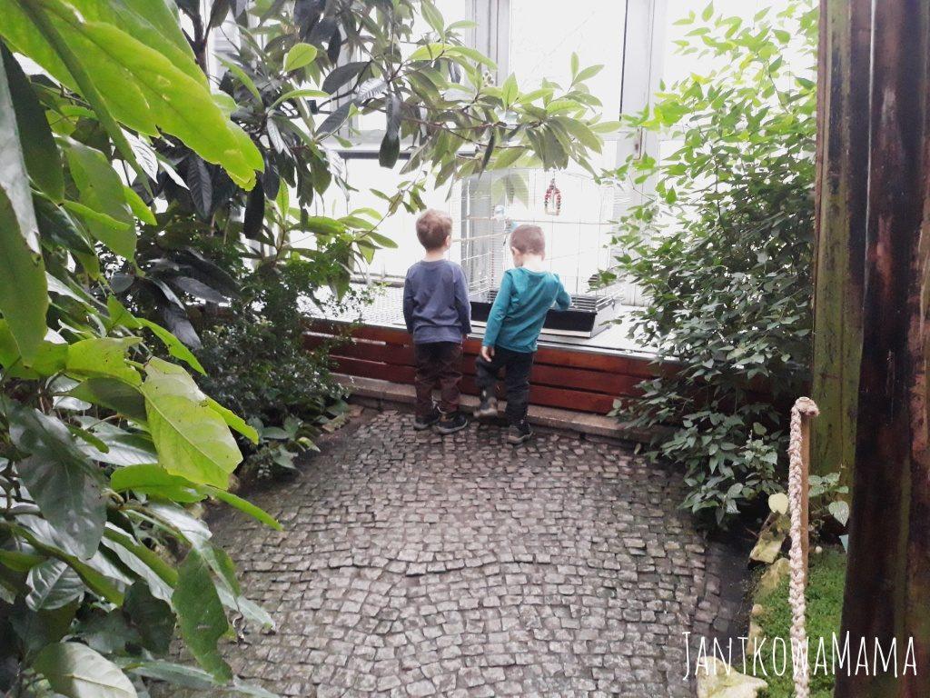 Odkrywamy z dziećmi Śląsk. Palmiarnia w Gliwicach.